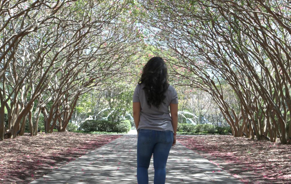 Dallas Arboretum tree canopy